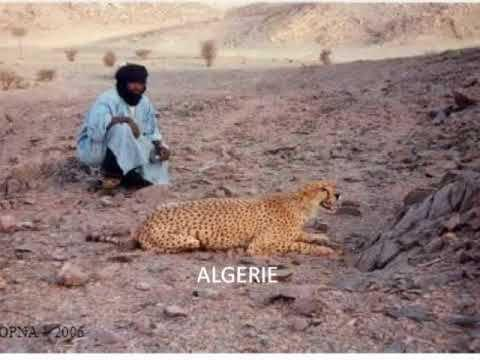 صور نادرة للطبيعة الجزائرية - صفحة 3 Do